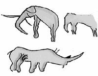 Calco de grabados del Sáhara Occidental que representan dos elefantes y un rinoceronte. (Basado en Pellicer y Acosta, 1972)